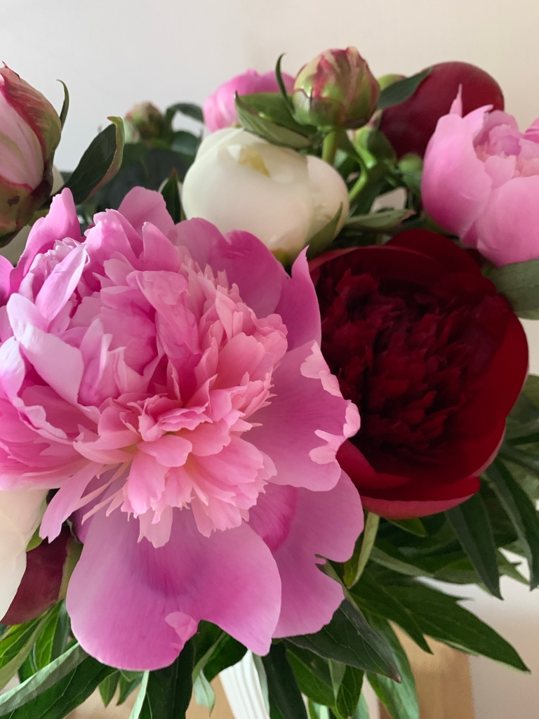 Some peonies