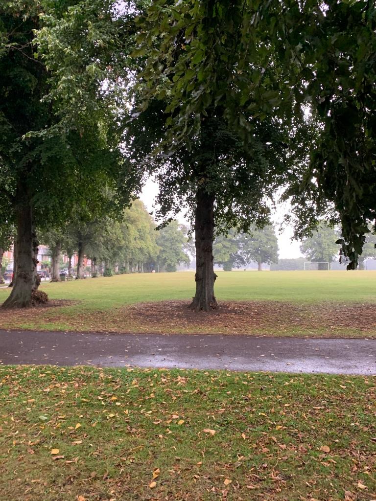 rain in a park