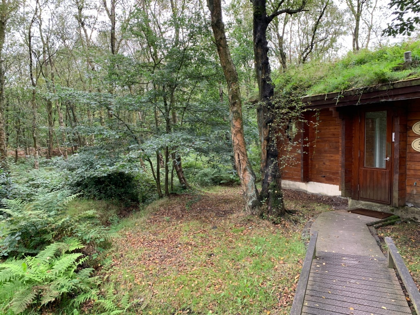 A log cabin with a grassy plant covered roof in woods
