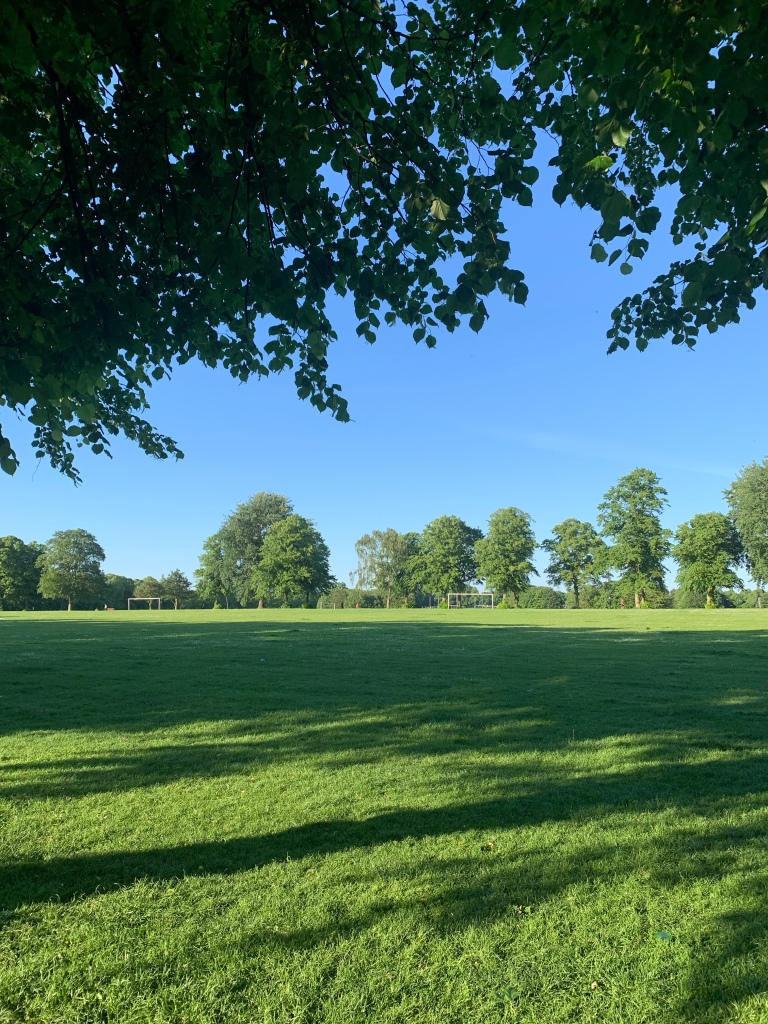 A sunny park in the evening