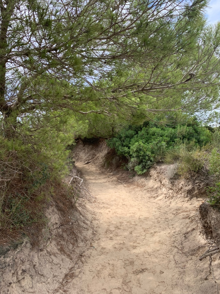 A path leading to a beach, with bushes and small trees arching over it