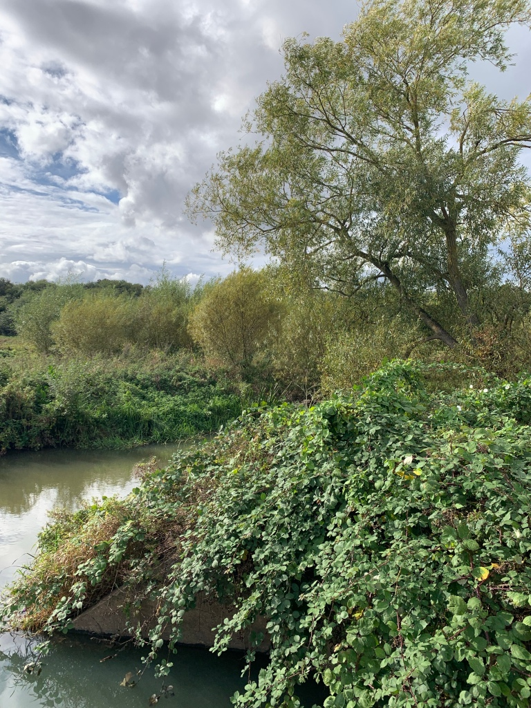 A small river/large stream and surrounding trees and fields